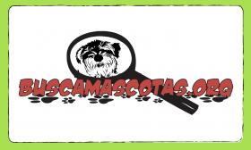 BUSCA MASCOTAS ID